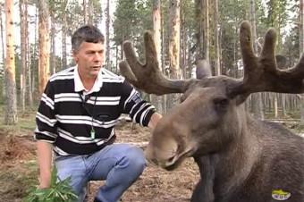 Vittangi Älgpark – Moose Park