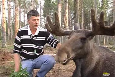 Vittangi Älgpark - Moose Park