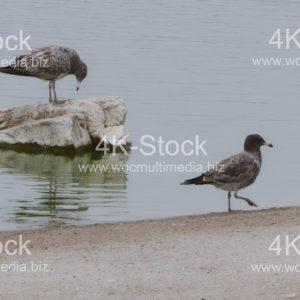 Birds - N5023