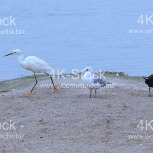 Birds - N5026